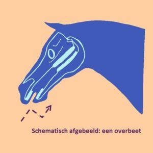 Overbeet paard schematisch weergegeven 2