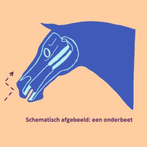 paardenhoofd onderbeet02 vierkant 3
