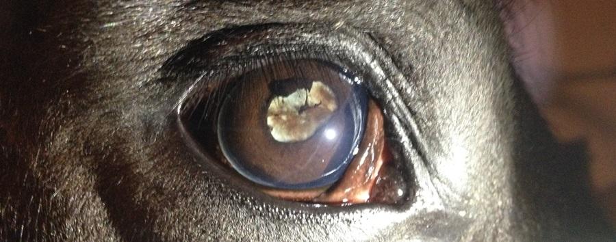 duidelijke afwijkingen aan de lens na een maanblindheidsaanval