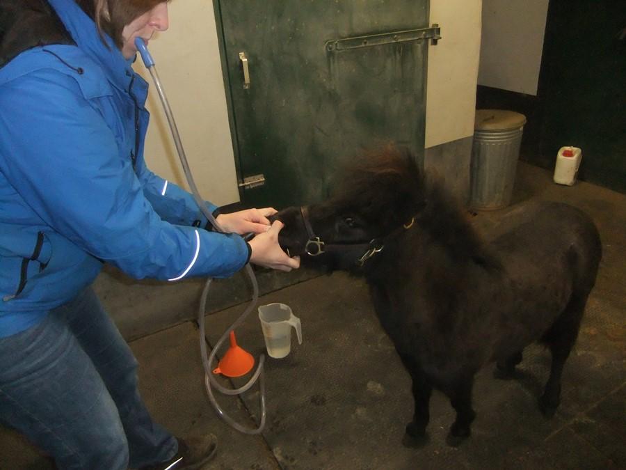 Hyperlipemie pony sonderen