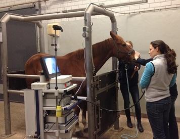 Maagscopie bij een paard