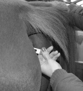 Temperatuur opnemen bij het paard