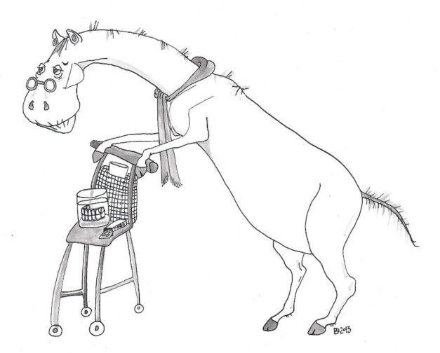 oud paard.Dymphie vd Bergh1