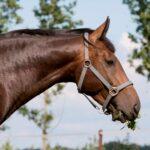 paard blad