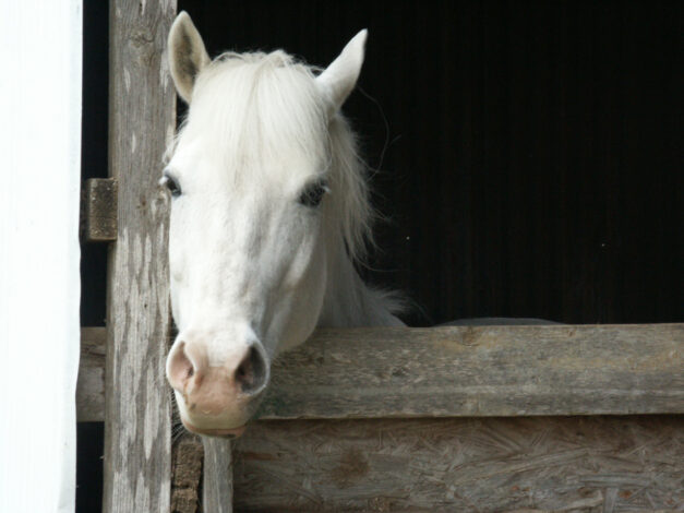 gevoelig paard op stal