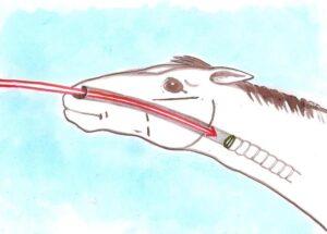 cornage endoscopie