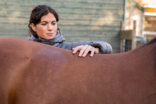 Chiropractie - testen van de zijdelingse beweging van de rug van het paard - Anna Lagendaal