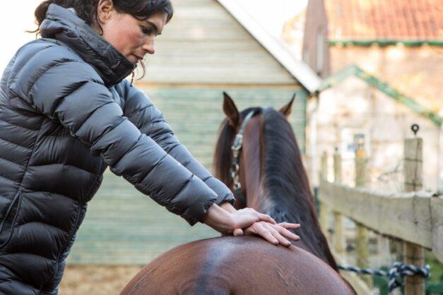 Chiropractie - manipulatie van het SI gewricht van het paard - Anna Lagendaal