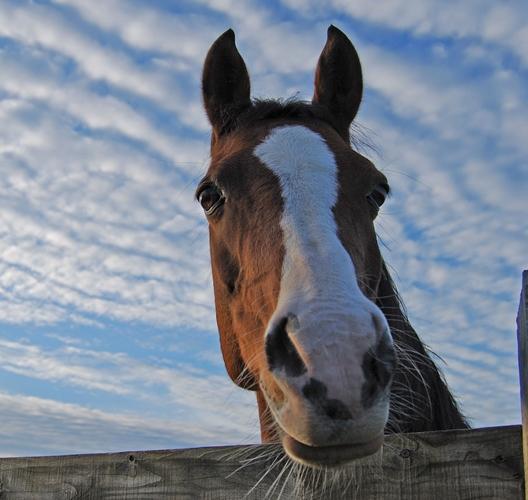 paardenwelzijnscheck
