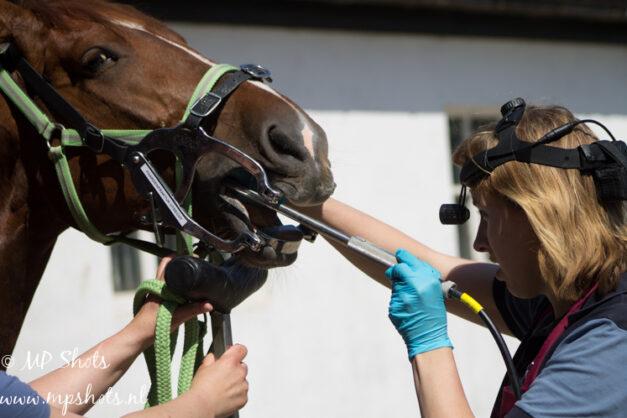 Gebitsbehandeling-bij-paarden-om-ongelijkmatige-slijtage-te-corrigeren en diastasen te voorkomen
