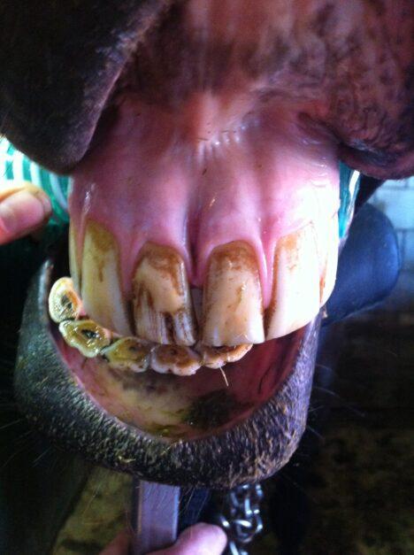 Gesloten, klepvormige diastase tussen snijtanden van het paard