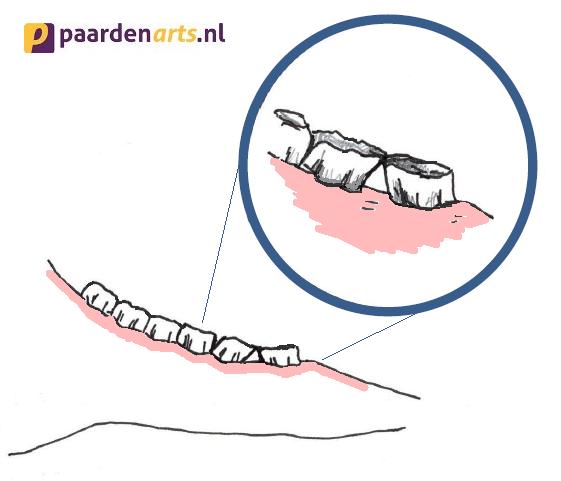 gesloten of klepvormige diastase tussen de kiezen van een paard - Paardenarts.nl