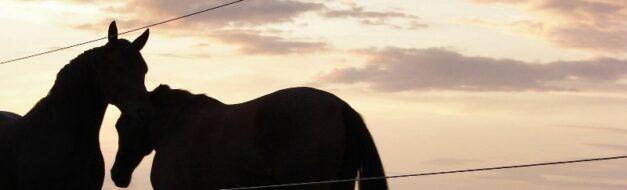 Geriatrisch paard header