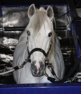 Aquatrainer voor revalidatie van paarden