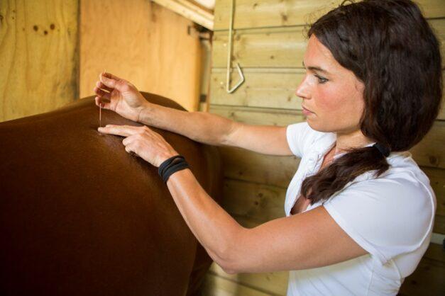 Dry Needling paard - behandeling door Anna Lagendaal2b