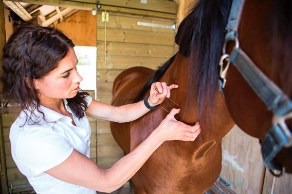Dry Needling paard - behandeling door Anna Lagendaal3