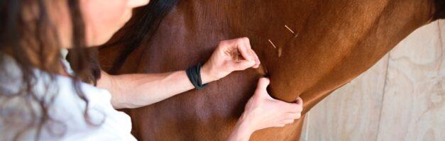 Dry Needling paard - behandeling door Anna Lagendaal4