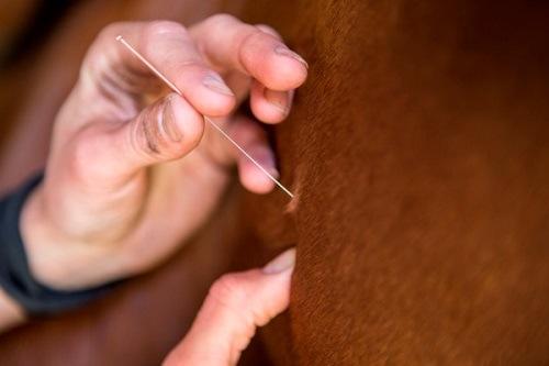 Dry Needling paard detailfoto 1