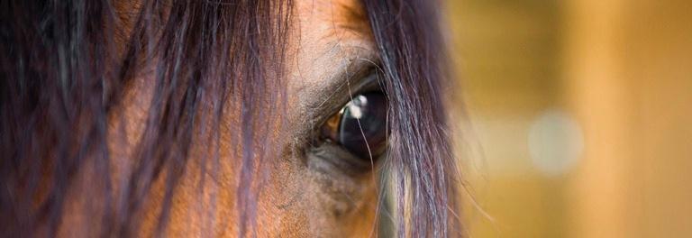 Dry Needling paard detailfoto paard
