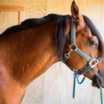 Dry Needling paard hals