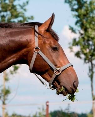 Giftige bomen en struiken voor paarden small