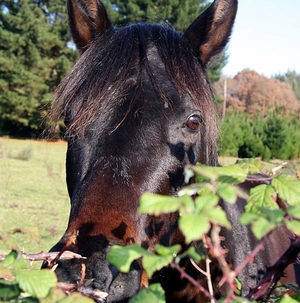 paard nieuwsgierig giftige bomen en struiken