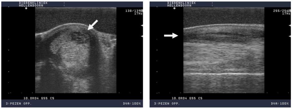 Foto's echobeelden (dwarsdoorsnede en lengtedoorsnede) van de oppervlakkige buigpees van het paard op de foto's hiervoor ( midden en rechts). Duidelijke verdikking van de buitenkant van de pees met verlies van vezelstructuur. Oppervlakkige buigpees laesie.
