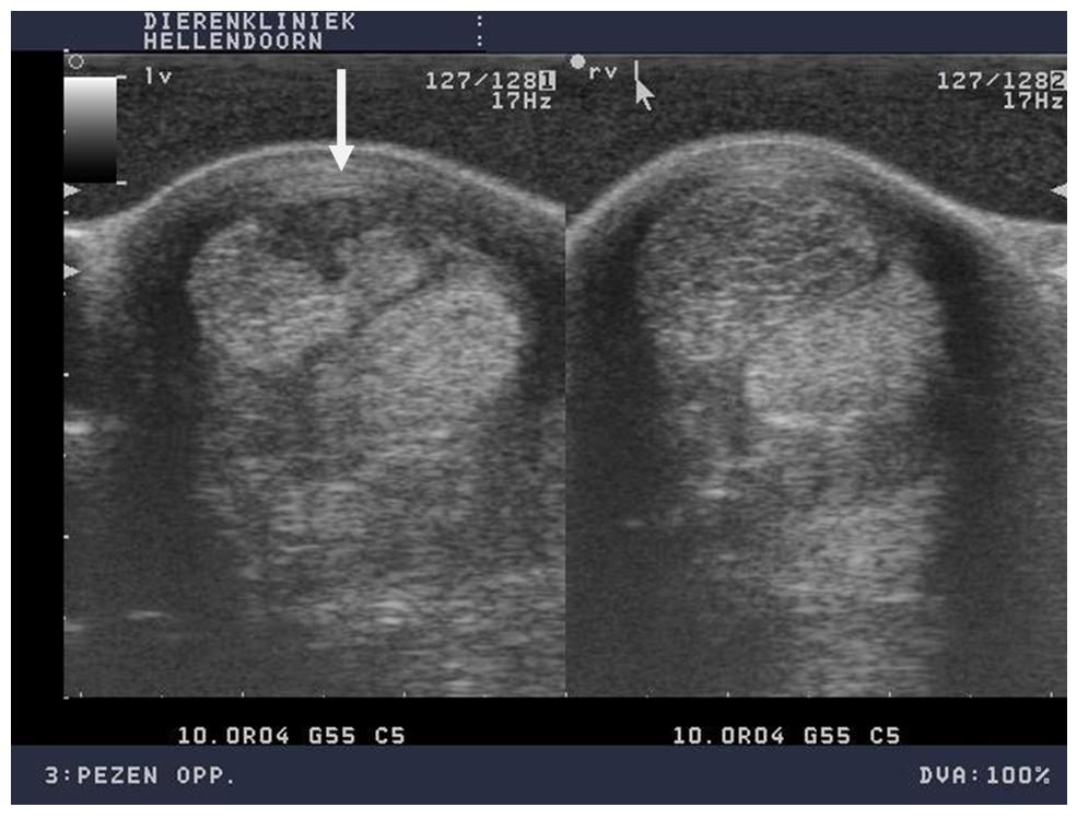 Toelichting foto's: Dwarsdoorsnede oppervlakkige buigpees. Peeslaesie in linker oppervlakkige buigpees. Vezelverlies is te zien als als zwarte plek in de pees (zie pijl). Rechts het andere been zonder zwarte plek, wel is hier deze oppervlakkige buigpees te dik en heeft een wat te donker beeld op de echo (duidend op chronische tendinitis).