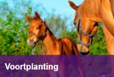 Rubriek Voortplanting Paardenarts.nl (2) smartblock