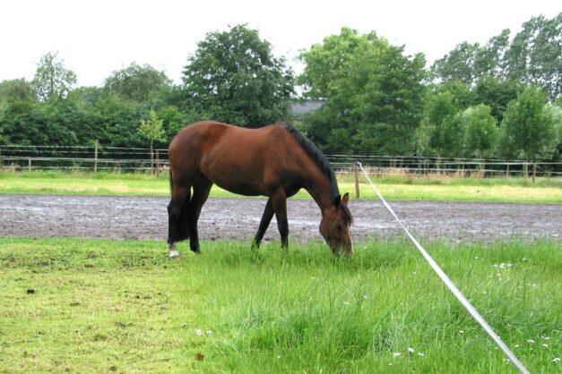 Weidegang voor paarden - strookbegrazing (foto Anneke Hallebeek)