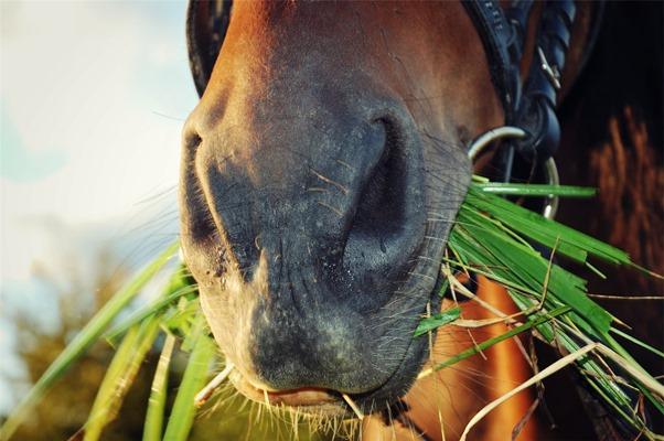 hoeveel gras eet een paard - weidegang aanbieden