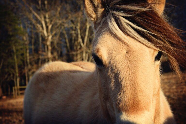 paardenarts-nl-paardenvoeding-vermageringsdieet-voor-paarden-uitgelicht