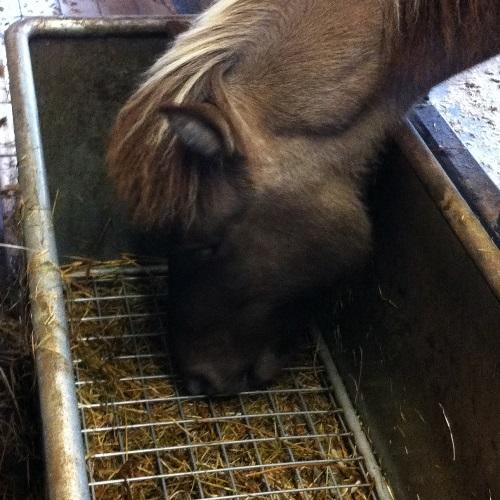 paardenarts-nl-paardenvoeding-slowfeeder-voerrek-over-het-hooi-anneke-hallebeek