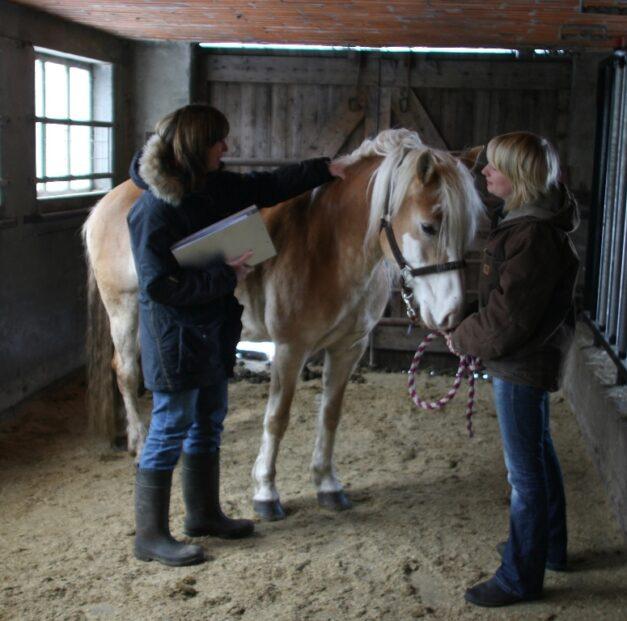 paardenarts-nl-paardenvoeding-vermageringsdieet-bcs-anneke-hallebeek