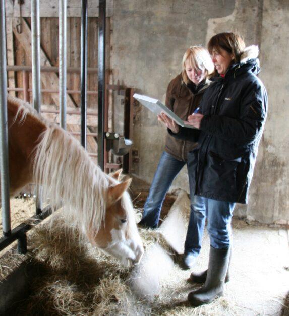 paardenarts-nl-paardenvoeding-vermageringsdieet-voermanagement-anneke-hallebeek