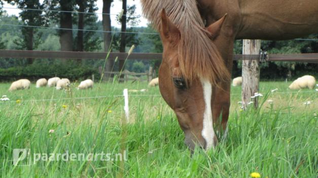 Paardenarts.nl_voeradvies op maat per seniorpaard_headerbeeld