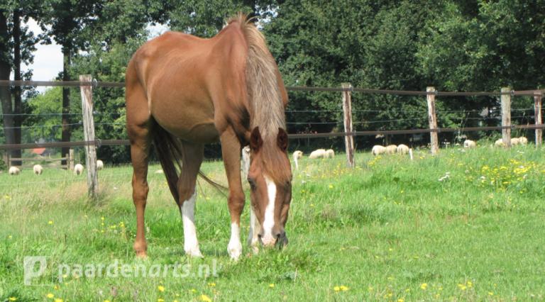 Paardenarts.nl - Voeradvies senior paard - voerkeuze per paard2