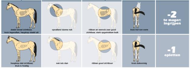 Bonpard Body Condition Score bij paard -1 en -2