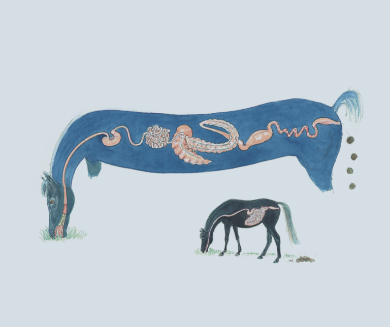 Paardenarts.nl - Bonpard paardenvoeding uitgelicht weerstand paard (door M. Felius)