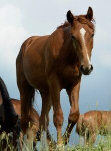Paardenarts.nl - luchtwegproblemen - preventietips